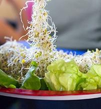 23-vegetarianus-fesztival-negyedik.jpg