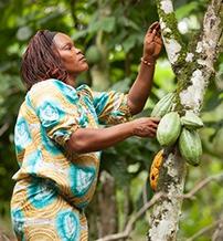 eloszor-tette-kozze-fenntarthato-kakaotermesztesi-tervenek-eredmenyeit-a-mars-negyedik.jpg