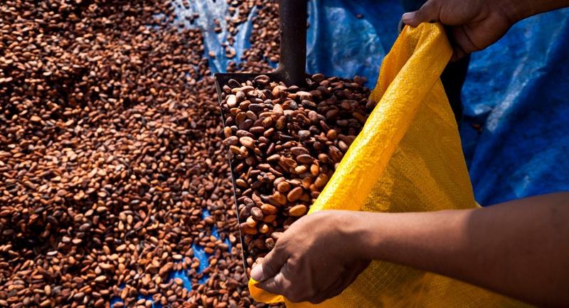 eloszor-tette-kozze-fenntarthato-kakaotermesztesi-tervenek-eredmenyeit-a-mars.jpg