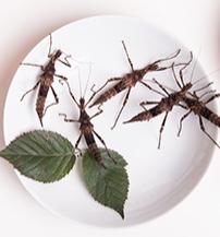 rovarkoktel-es-larvapecsenye-lesznek-a-jovo-etelei-harmadik.jpg